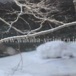 雪景色(pho-2013wi-0002)