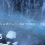 雪景色(pho-2013wi-0020)