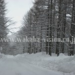 雪景色(pho-2013wi-0039)
