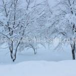 冬の白川郷(pho-2013wi-0091)