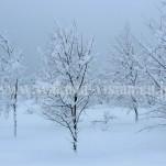冬の白川郷(pho-2013wi-0092)