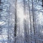 冬の北海道(pho-2013wi-0171)
