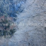 冬の北海道(pho-2013wi-0231)