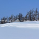 冬の北海道(pho-2013wi-0237)