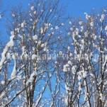 雪景色(pho-2013wi-0254)