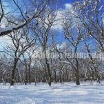 雪景色(pho-2013wi-0267)