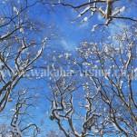 雪景色(pho-2013wi-0268)