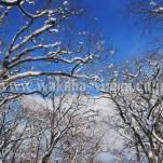雪景色(pho-2013wi-0269)
