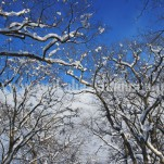 雪景色(pho-2013wi-0270)