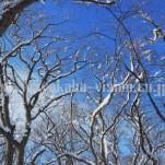 雪景色(pho-2013wi-0272)
