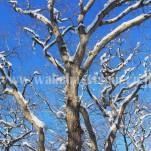 雪景色(pho-2013wi-0273)