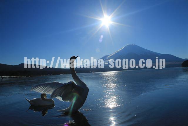 富士山 (2344)