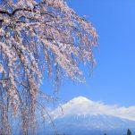 富士山 (2460)