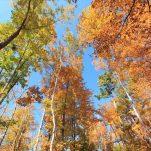 autumn (172)