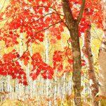 autumn (252)