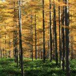 autumn (310)