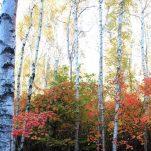 autumn (340)