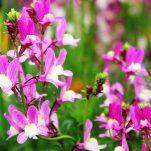 flower (43)