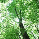 green (558)