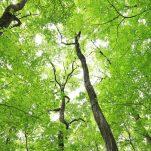 green (687)
