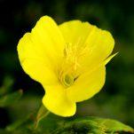 flower (1717)