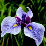 flower (416)