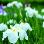 flower (447)