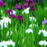 flower (451)