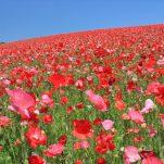 flower (1026)