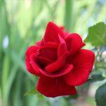flower (269)