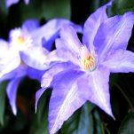 flower (287)