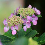 flower (519)