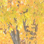 autumn (1435)