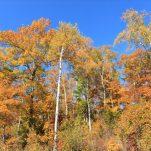 autumn (145)