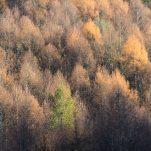 autumn (413)