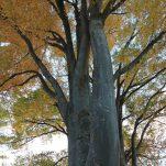autumn (1360)