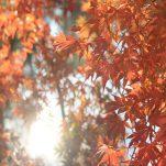 autumn (1253)