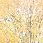 autumn (1310)