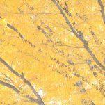 autumn (1407)