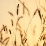autumn (601)