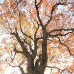 autumn (1692)