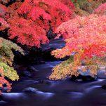 autumn (28)