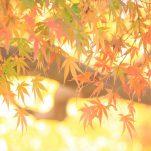 autumn (1712)