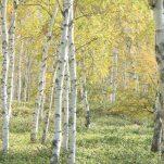 autumn (653)