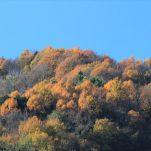 autumn (394)