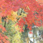 autumn (1260)