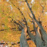 autumn (1347)