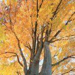 autumn (1333)