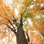 autumn (458)