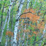 autumn (641)